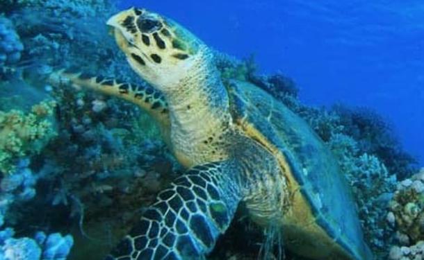 Escapade sur la route des tortues au sud de la Martinique
