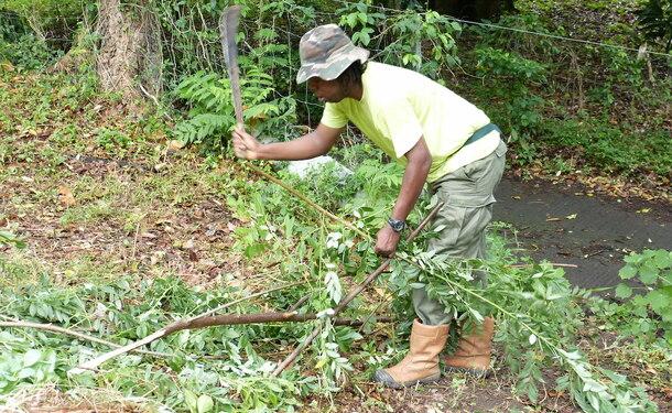 Des petites astuces antillaises pour faire pousser votre jardin