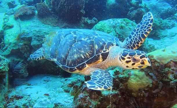 Baptême de plongée en mer des caraïbes