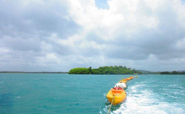 Randonnée en Kayak dans la mangrove des Trois-Ilets
