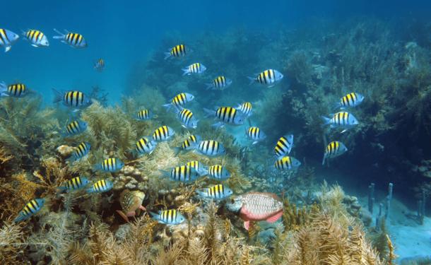 Reefboard : expérience sous-marine hors du commun