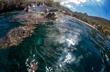 Baignade avec les tortues et découverte du littoral