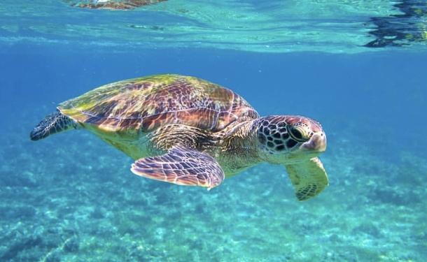 Découverte de la côte caraïbe et du sud de l'île