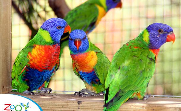 Le zoo de la Martinique