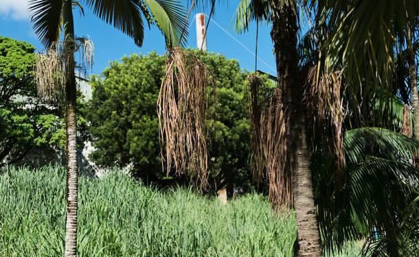 Les Jardins de l'Habitation Clément