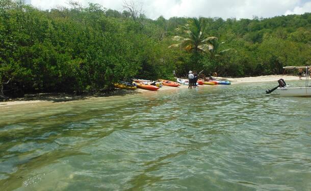 Location de Kayak - balade à l'îlet Chancel et la mangrove