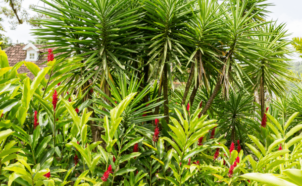 Le jardin botanique du Carbet